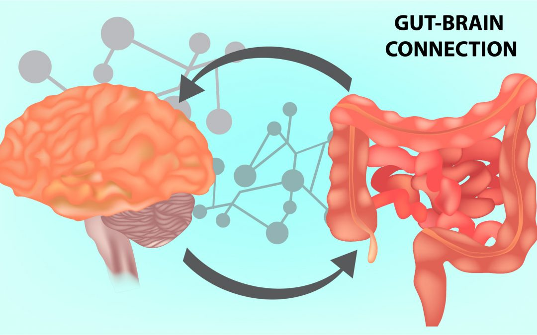 Gut Brain Connection >> The Gut Brain Connection How To Feed Your Brain Chrysalis Living