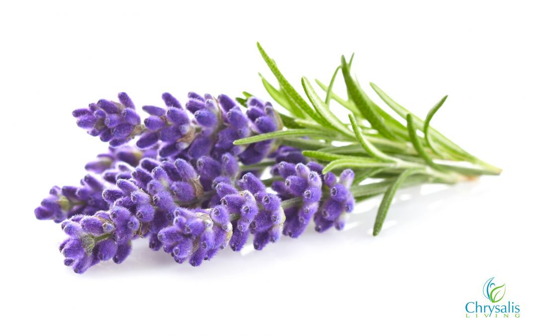 Recipe – Lavender Essential Oil