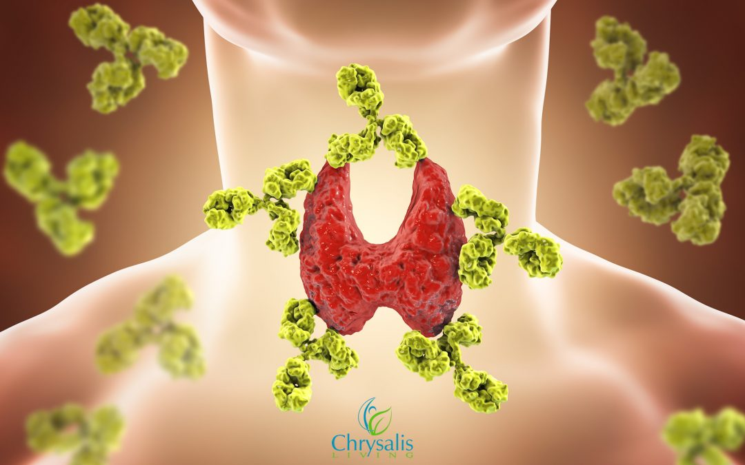 Your Thyroid – Foods and Nutrients to Help